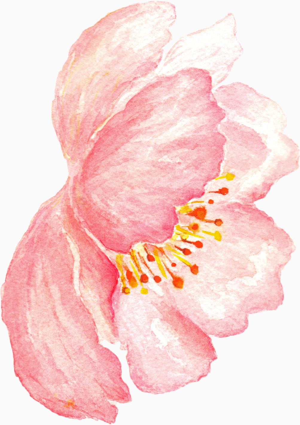 水彩 手绘 花朵 唯美 彩色 鲜花 树叶