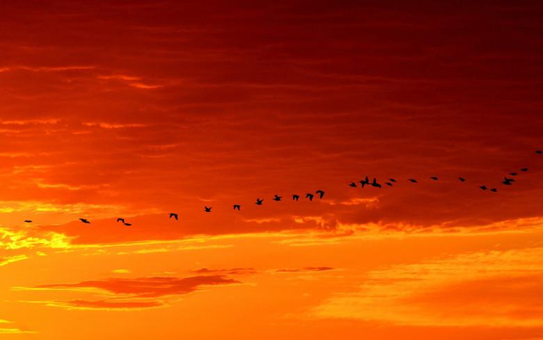 群鸟穿梭于橙色的天空