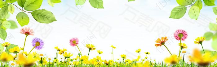 唯美花朵海报背景