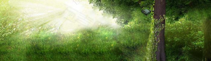 绿树 草地 背景图