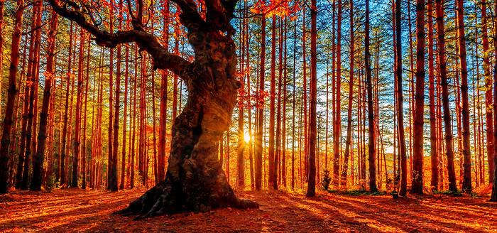 秋天摄影背景