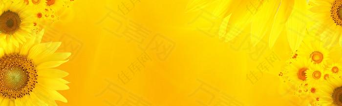 绚丽金黄色向日葵海报背景
