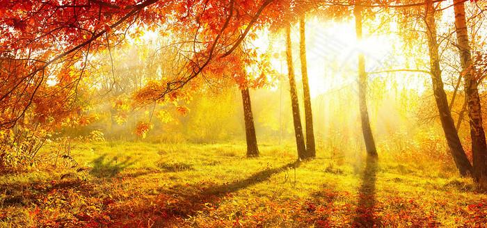 秋天乐章背景
