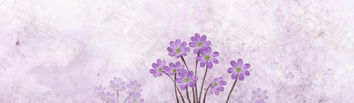 紫色花朵 背景 banner