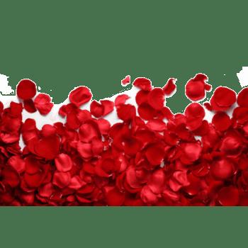 红色浪漫梦幻玫瑰花瓣高清特写