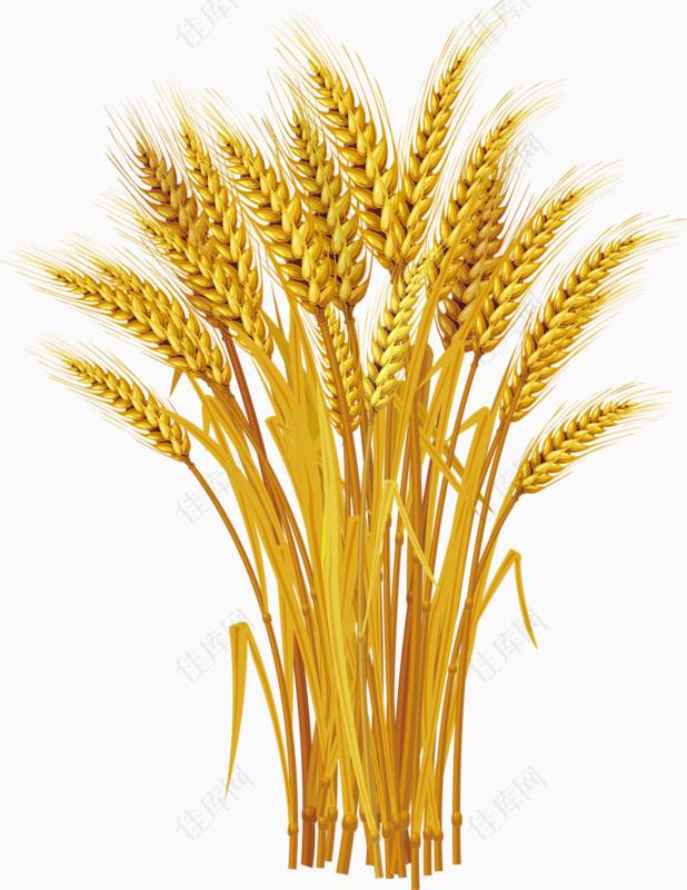 黄色丰收麦穗