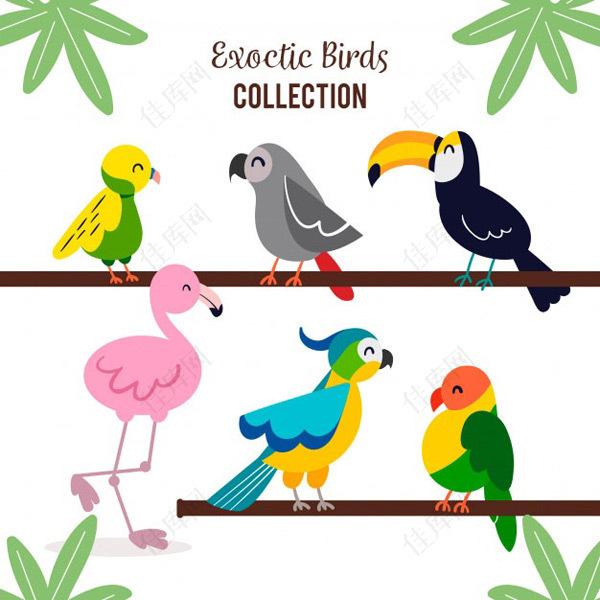 卡通鸟类插图