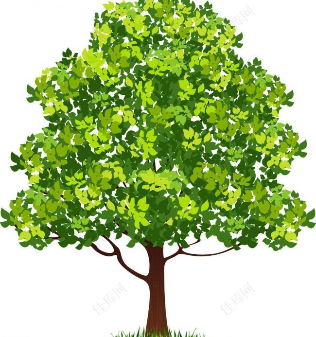 绿树矢量图图片
