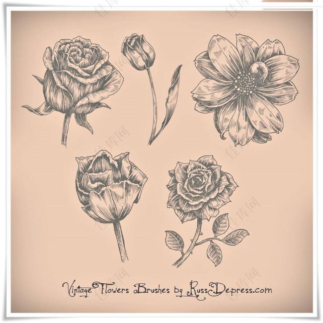 PS笔刷手绘复古玫瑰