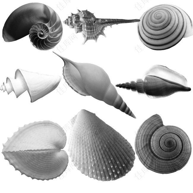 贝壳(PS笔刷)